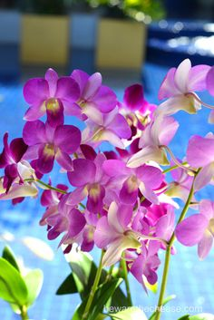 Purple orchids. - www.bewarethecheese.com