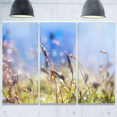 Abstract Summer Spring Moss Flowers - Modern Landscape Glossy