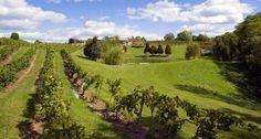3. Vinoklet Winery (Cincinnati)