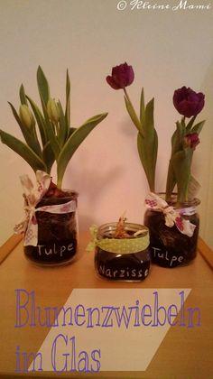 Frühlingsblumen im Glas, spring flowers in a jar, Montessori Natur/ Nature