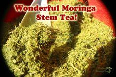 Organic Moringa Stem Tea!