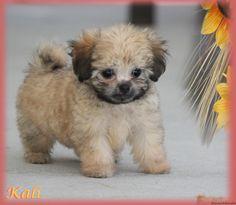 Media Library ‹ Always Adorable Mi-Kis — WordPress Daisy, Wordpress, Puppies, Animals, Ideas, Animales, Animaux, Margarita Flower, Puppys