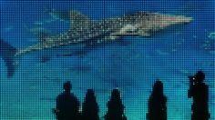 #Stippen van stippen op een walvishaai. #synchroonkijken Noud de Greef