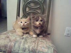 Look at this cute two for one pet of the month for June :) #DrKupkee #AdoptAShelterCat