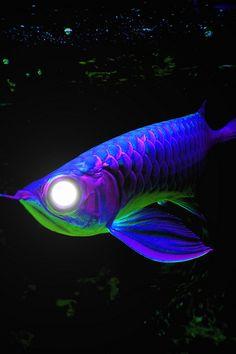 Purple-Neon Arowana Mutant Fish deeps sea fish under water world fish Underwater Creatures, Underwater Life, Fauna Marina, Dragon Fish, Deep Sea Creatures, Beautiful Sea Creatures, Life Under The Sea, Salt Water Fish, Cool Fish