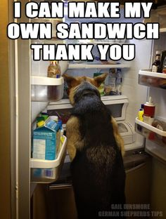 I would bet money my german shepherd could do it before my husband could! Lol