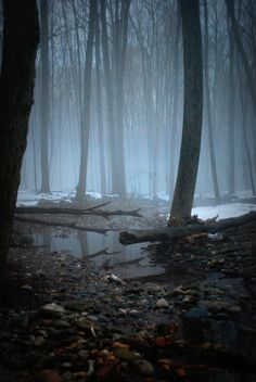 """Let's take a """"nature"""" walk in these misty woods."""