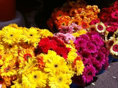 Gerbera daisies to choose from at market