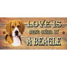 Beagle Wooden Funny Sign Wall Plaque Gift Present Love is Being Owned By A Beagle
