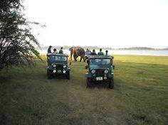 Image result for wild safari picture sri lanka Sri Lanka, Safari, Pictures, Image, Photos, Grimm