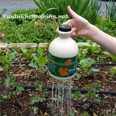 Gardening with Children - a collection of ideas compiled at The Crafty Crow