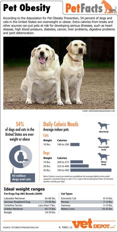 Quick visual from VetDepot.com about pet obesity. - fitpawsusa.com