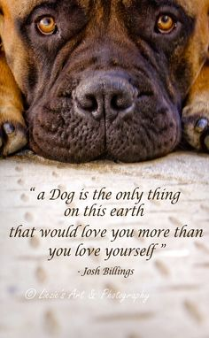 A dog's love is unconditional