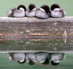 Baby bird huddles