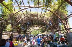 With a massive overhang of plants that provide a beautiful organic roof to the market, the Vineyard Farmers Market in Fresno is a great way to spend a Saturday morning. Fresno County, Fresno California, Central California, Moving To California, California Travel, Yosemite California, Weekend Trips, Vacation Trips, Vacation Spots