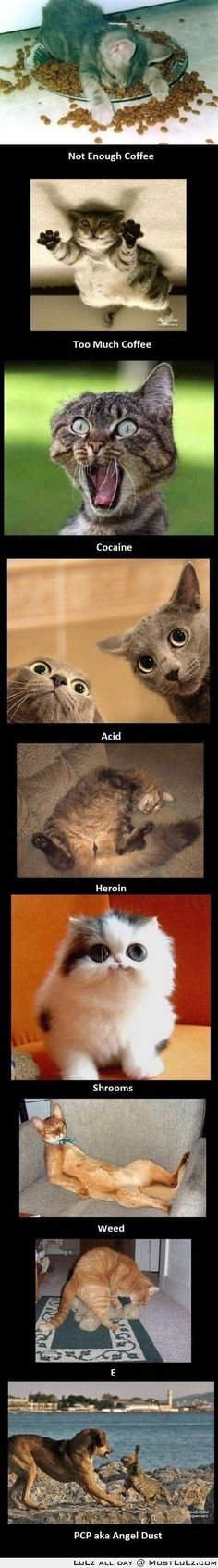 Funny pictures about Cats on drugs. Oh, and cool pics about Cats on drugs. Also, Cats on drugs. Humor Animal, Animal Memes, Funny Animal Pictures, Funny Animals, Cute Animals, Funny Images, Funny Photos, Crazy Animals, Funniest Pictures