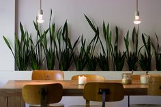 Greens in a row. Lovely table and chairs too.Not to forget the simple lights. / Sandra Juto