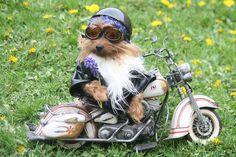 Ruff rider.