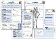 Le squelette