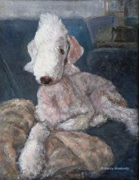 My Bedlington Terrier