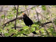 Bună dimineaţa! Toco Toucan, Birds Online, Green Wing, Blue Band, Bird Species, Bird Watching, Wildlife, Image, Birds