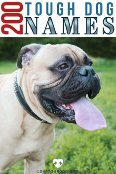 Looking for the perfect dog name to give your pup, that's sure to strike fear into the hearts of any unwanted intruders? Below you'll find over 200 different tough and aggressive dog names that are based on mythology, military vocabulary, regal names, and more! Tough Dog Names, Dog Names Male, Big Dog Little Dog, Big Dogs, Cute Dogs, Dog Information, Military Dogs, The Perfect Dog