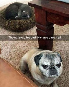 The cat stole his bed, his face says iT all