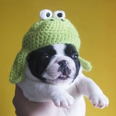 Puppy with the most adorable frog hat ever. what a derpy-looking dog