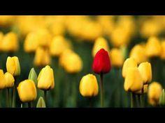 Vivaldi - La Primavera - Spring - Printemps -Las cuatro estaciones-Salzburger Kammerorchester - YouTube    great!