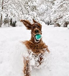 Can't wait to frolic in the snow next week in Montana!