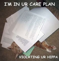 Funny...although no one really knows what hipAA means. Two As, one P. Health Insurance Portability and Accountability Act.