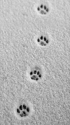 Small paw prints in the snow. the # Paw prints You are in the right place about claros linea Here we offer you the most beautiful pictures about the claros palavra you are looking for. When you examine the Small paw prints in the snow. the # Paw prints … Cat Photography, Winter Photography, Amazing Animals, Cute Animals, Crazy Cat Lady, Crazy Cats, My Crazy, Cat Paws, Dog Cat