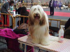 Exposición Nacional e Internacional Canina en IFEPA (Murcia) / National and International Dog Show in IFEPA   (Torre Pacheco-Murcia) / perros / belleza canina / Mediterranean Natural