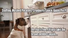 #thanksgiving #dog #deliciousfood