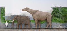 Paraceratherium Transouralicum by SameerPrehistorica on DeviantArt