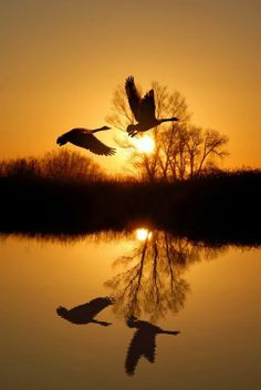 Birds and beautiful nature photography Beautiful Sunset, Beautiful Birds, Beautiful World, Beautiful Things, Pretty Pictures, Cool Photos, Amazing Photography, Nature Photography, Photography Composition
