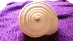 """Titulo: """"El espiral del oceano"""" Autor:Téllez Castañeda Miranda Abigail Obturación:1/5 Apertura:20 Fecha:2/10/2016 Iso: 800"""