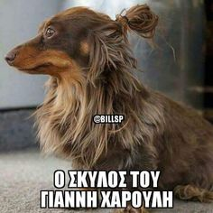 Funny Greek Quotes, Funny Picture Quotes, Cute Quotes, Funny Photos, Funny Images, Funny Animal Memes, Funny Animals, Funny Captions, Just Smile