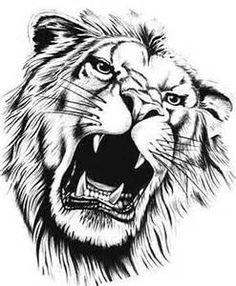 desenhos de leão - Pesquisa Google