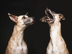 Fotógrafa tira retratos expressivos de seus três cães - Guia da Semana