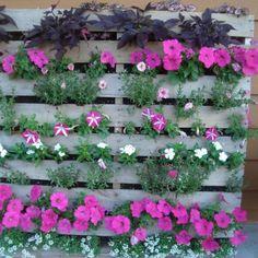 une palette en bois adossée au mur et remplie de terre pour accueillir des plantes et flers roses et bleues entre les planches de bois.
