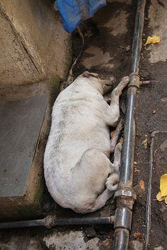 The Sleeping Dog of Indraji Nagar Bandra