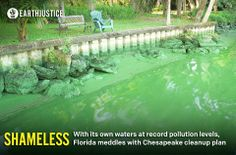 SHAMELESS: With its manatees, dolphins, fish, and seabirds dying in record levels, you'd think Florida would put a little more effort tackling its horrendous water pollution problem. But Florida's Attorney General Pam Bondi and Governor Rick Scott have been busy with another fight: suing to stop the cleanup of the Chesapeake Bay hundreds of miles away in another state. http://earthjustice.org/blog/2014-february/florida-governor-embraces-polluters-in-chesapeake