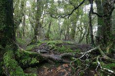 Where's Frodo? | by Tuatapere Hump Ridge Track