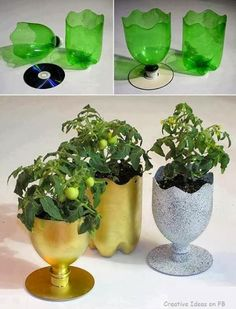 Recycling of Plastic Bottles: Grow Your Plants in Painted Plastic Bottles