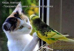 Кеша, повторяй: - Покормите Мурзика, покормите Мурзика ......