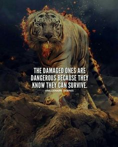 Realness been through shit my whole life but i always come back stronger feeling emotional depressed mentalhealth mentalhealthawareness needs to be better in this world Tiger Quotes, Lion Quotes, Wolf Quotes, Francis Chan, Motivation Success, Success Quotes, Workout Motivation, Motivational Songs, Inspirational Quotes