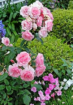 Adorable beautiful pink flowers in a garden... click on picture to for more
