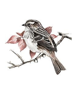 White-Throated Sparrow  Original Watercolor by FineArtGiftShop