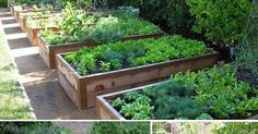 Blog o plánování a realizování vysněné zahrady.